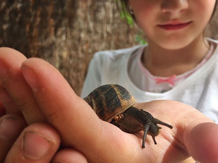 Midsection of girl holding snail outdoors