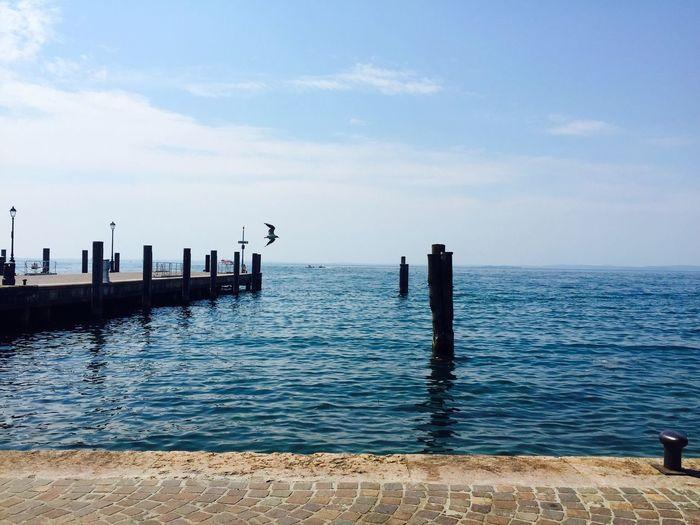 Lago Di Garda Shots]EyeEm Nature LoverItaliaBird[a:summeryItalylHappiness di Garda