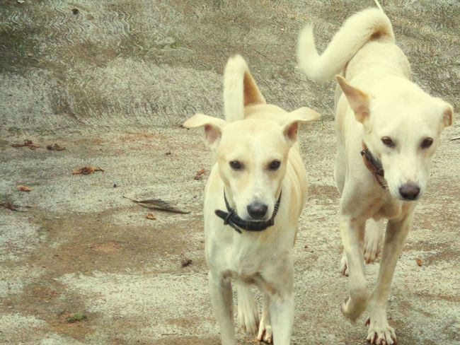 Best Friends Best Friends ❤ Best Friend Best Frends Dog Dog❤ Dog Love Dog Lover Dog Life My Dog <3 Pets My Pets Pets Corner