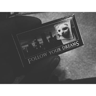 I will. Followyourdreams Cat Badass GladIFoundThis VscoVscoCamPotd