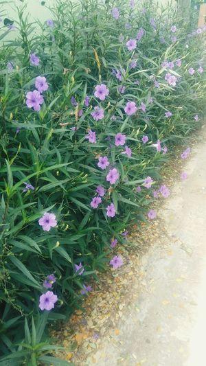 ดอกไม้งดงามเสมอ ไม่ว่ามันจะอยู่ที่ไหน First Eyeem Photo