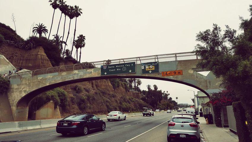Locally Foreign Santa Monica CaliLifeStyle