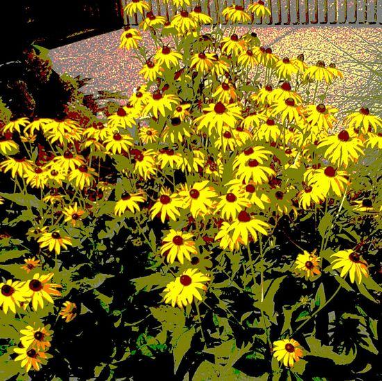 Yellow Flowers Beautyallaroundus