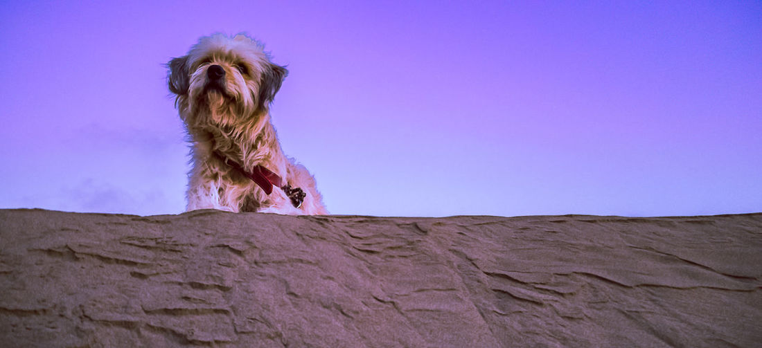 Low angle view of dog sitting on rock against sky