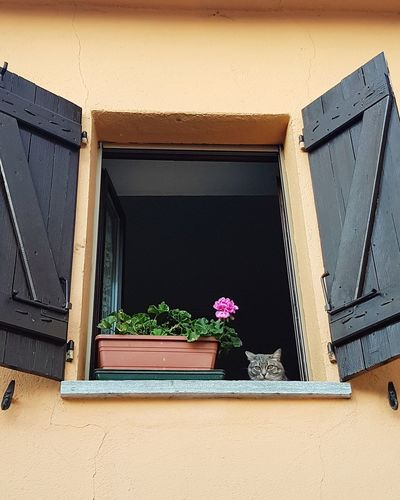 Cat At Window Cat Lurking Cat In The Street Langhe Village Street Cat Looking Courious Cat Flower Architecture No People Plant Day Built Structure Window Box Building Exterior