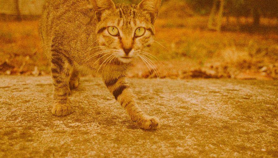 Portrait of cat on land