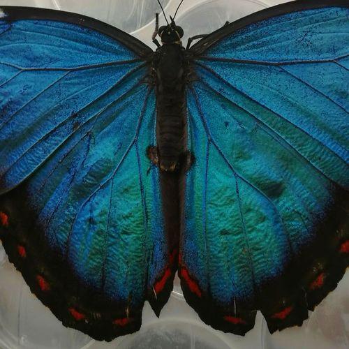 Nature Butterfly Blue Tropical Beautiful Rainforest