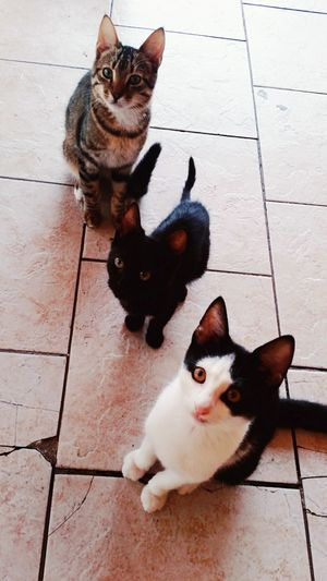 Kittens When Travelling Around Greece Kittens Lover 😻🐱 Animals Living Widely Cats