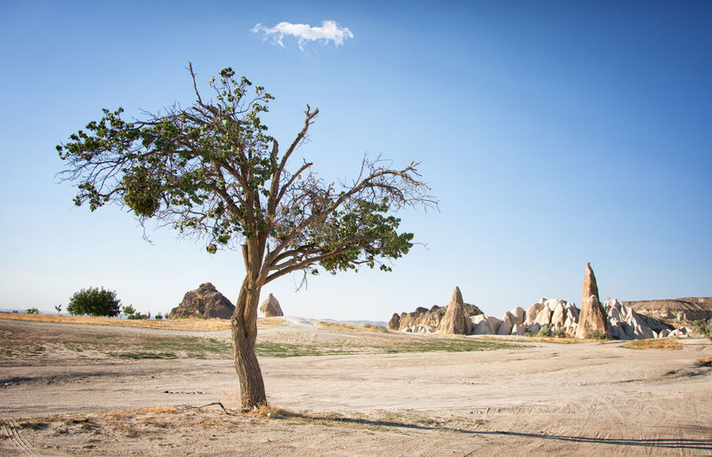 Ancient Arid Climate Beauty In Nature Clear Sky Day Landscape Nature No People Outdoors Rock - Object Rock Hoodoo Scenics Sky Sunlight Tranquil Scene Tranquility Travel Destinations Tree