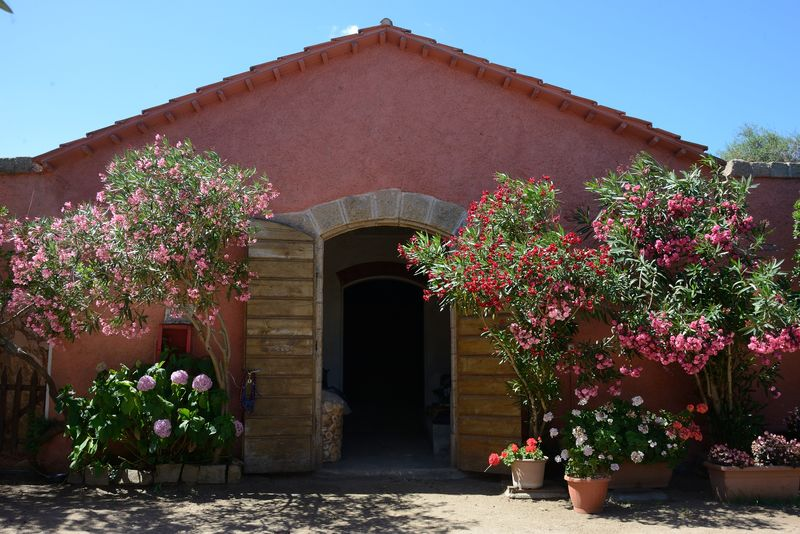 flowers Breeding Gardening Nature Oleander Flowers Summertime Architecture Building Exterior Caprera Day Flower Horses Boxes No People Oleander Plant Outdoors Riding School