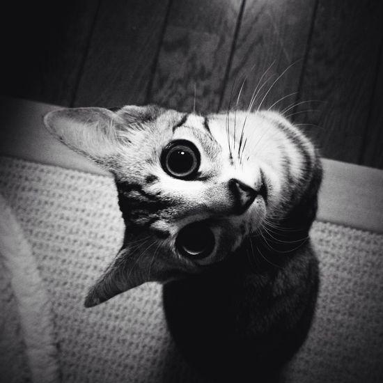 cat at Tokyo Cat