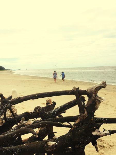 Beachphotography Windy Beach Log On Beach Driftwood Walking On Beach
