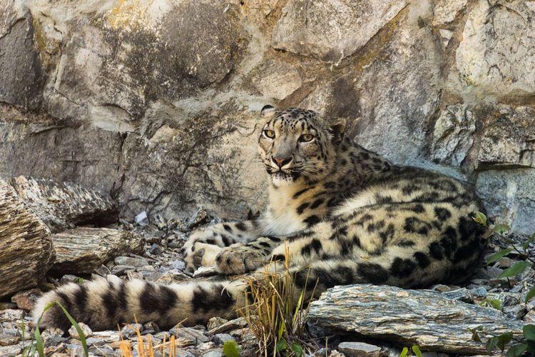 Panther Panther