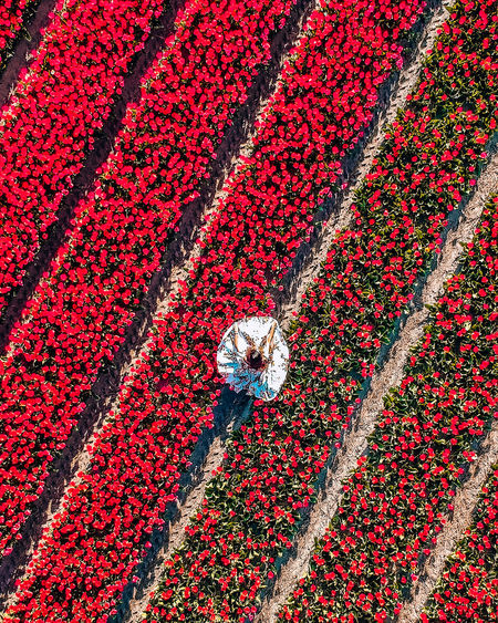 Aerial view of woman standing by red flowering plants