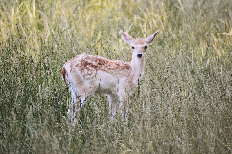 Pastel Power Light Deer Animals Sun Streamzoofamily Nikonphotography Nikon Beautiful Ladyphotographerofthemonth Grass Alone Lonely Nature Nature_collection Naturelovers Sweden