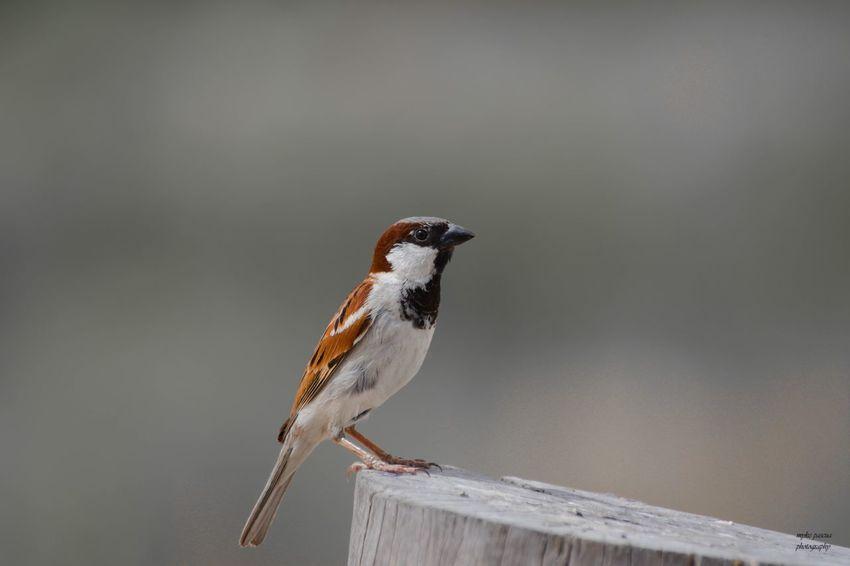 Solo Animal Animal Themes Animal Wildlife Bird Vertebrate Animals In The Wild One Animal No People Nature Songbird