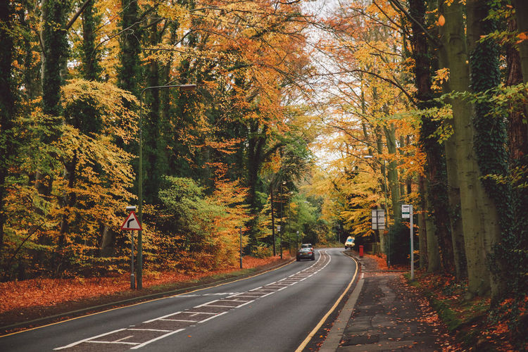 Autumn Autumn Beauty In Nature Change Day Dividing Line Epsom Forest Full Length Leaf Nature Outdoors Real People Road Road Marking Scenics The Way Forward Transportation Tree Tree Trunk Uk