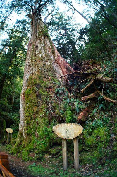 恩愛農場 Tree Growth No People Nature Outdoors Day Beauty In Nature 臺灣