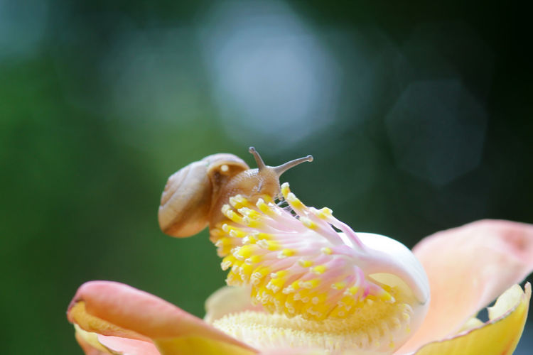 snails, snails over yellow flowers Beauty In Nature Close-up Day Finger Flower Flower Head Flowering Plant Focus On Foreground Fragility Freshness Growth Inflorescence Invertebrate Nature One Animal Petal Plant Pollen Selective Focus Vulnerability