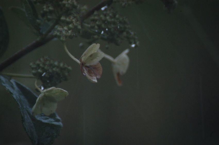雨音に包まれて眠りに着く。 Nature Flower Beauty In Nature 水滴 雨粒 Raindrops 紫陽花 あじさい Rain