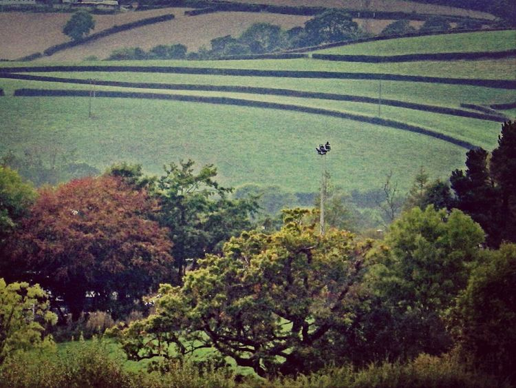 Wales Greenfields Countryside Hedges