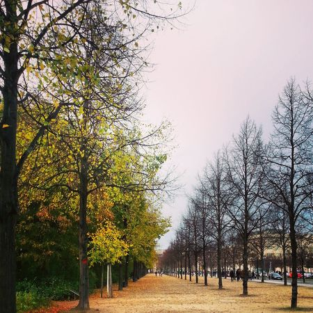 Colors Of Autumn Walking Around Flippa K Asks: What Inspires You?