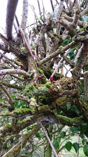 Branches New Life Newbuds New Beginnings Moss Trees Trees And Sky