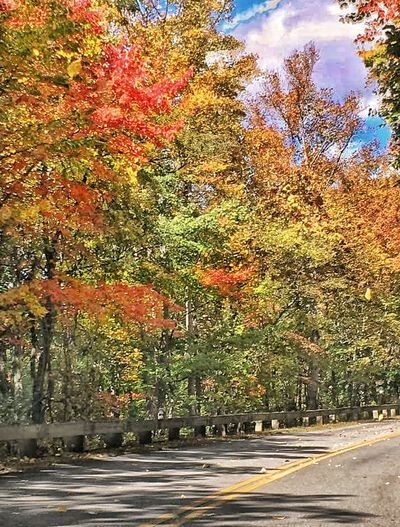 Trees Autumn Colors Road Side On The Road Autumn Leaf FallBeauty In Nature Earth Tones Beautiful Nature Trees Collection Trees Of Eyeem Nature Outdoors Multi Colored Relaxation Change Beauty In Nature Fall Color Seasons Change