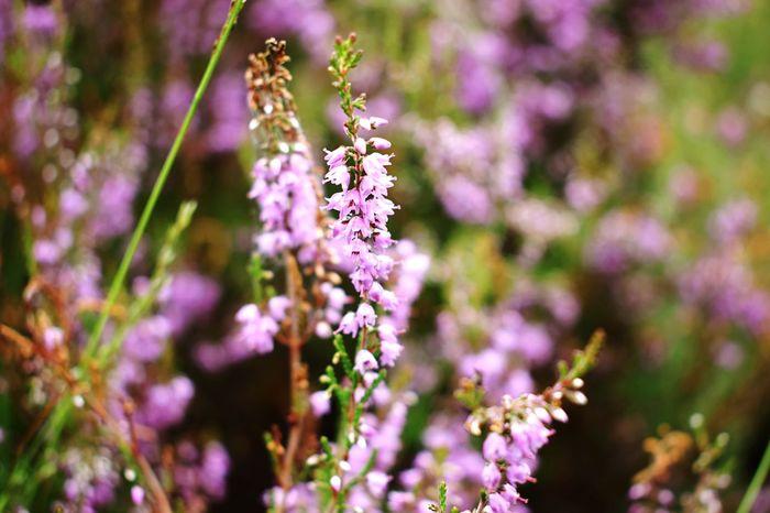 Flower Hay Macro Landscape Grass Colors