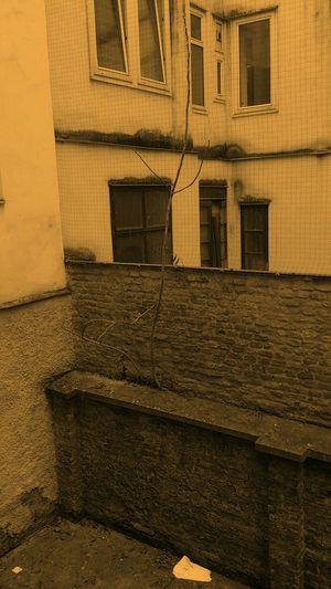 Die Selbe Pflanze Im Innenhof An Verschiedenen Tagen Innenhof Pflanze An Der Mauer Jänner 2014