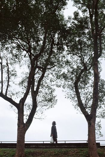 Rear view of woman sitting on bench against tree