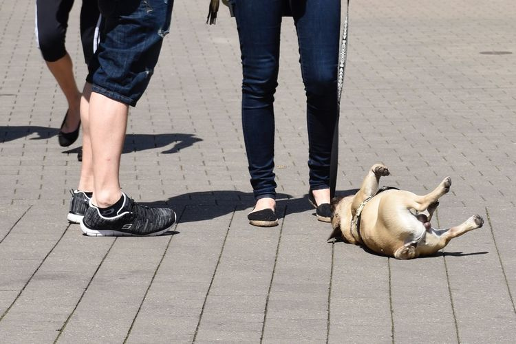 Tired Dog Low Section Human Leg Body Part City Animal Human Body Part The Street Photographer - 2018 EyeEm Awards Street Footpath Animal Themes One Animal Dog Casual Clothing Two People Real People Canine Pets Shadow Mammal Day Sunlight