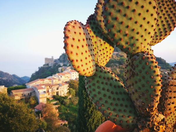 Prickly Pear Cactus Cactus Nature Plant Beauty In Nature No People Green Color Outdoors Day Close-up Sky Sunset Travel Destinations Colors Colors Of Italy The Week On EyeEm Italy❤️ Savoca, Sicily Perspectives On Nature EyeEm Ready   An Eye For Travel The Traveler - 2018 EyeEm Awards The Still Life Photographer - 2018 EyeEm Awards