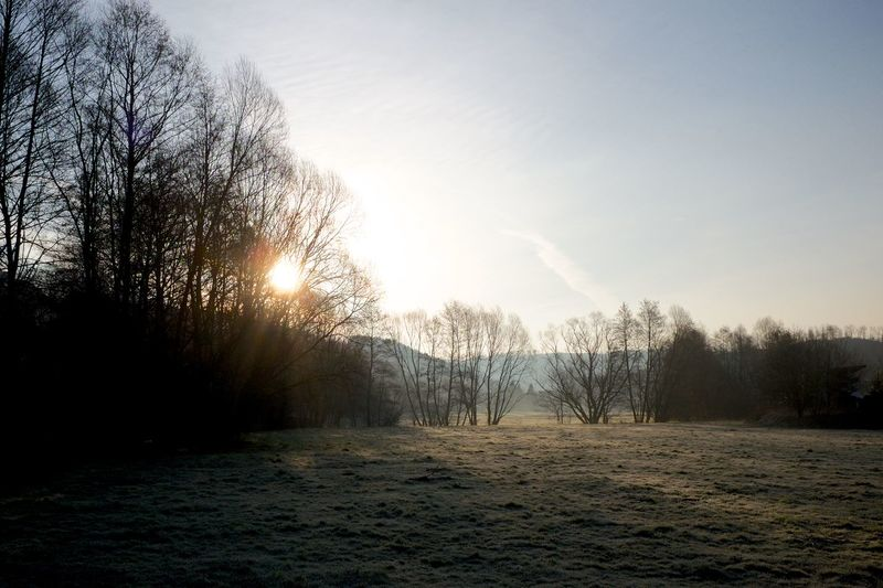 Early spring morning mood Cold Frosty Landscape Morning Morning Light Nature No People Outdoors Sky Spring Springtime Sun Sunlight Sunrise Tree