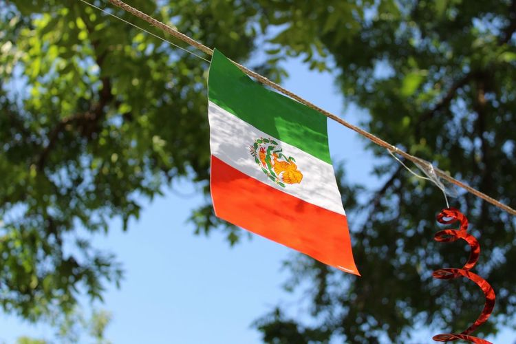 Low angle view of mexican flag against tree