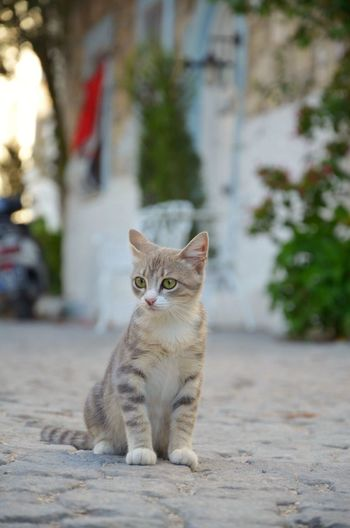 EyeEm Selects Domestic Cat Animal Themes Feline One Animal Focus On Foreground Domestic Animals Street Mammal Pets Portrait Looking At Camera Day Sitting Outdoors No People Nature