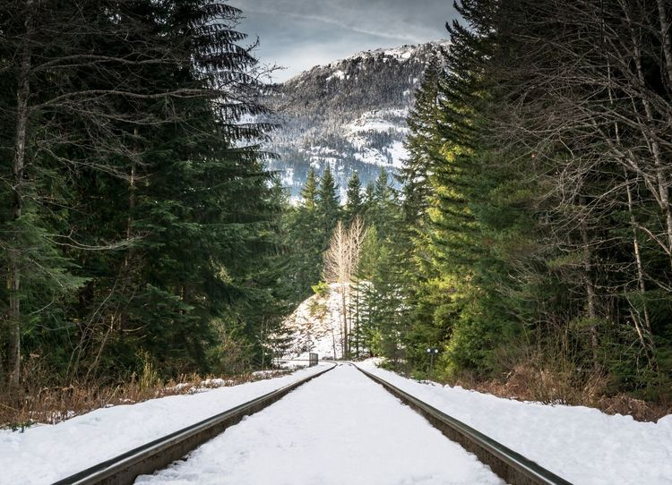 #beautifulbc #supernaturalBC Beauty In Nature Cold Temperature Day Forest Growth Landscape Nature No People Outdoors Scenics Sky Snow Tranquil Scene Tranquility Tree Weather Winter