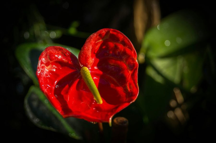 Fleur Photo #photos #pic #pics #TagsForLikes.com #picture #pictures #snapshot #art #beautiful #instagood #picoftheday #photooftheday #color #all_shots #exposure Composition Focus Capture Moment [ HTers #Hashtags #amazing #commentback #comme Nts #follow #followback #follows #instagood #like #likeback #likes #love #photooftheday Picsoftheday Pleasecomment Pleaselike Shoutout Shoutoutback [ Plants Natural Beauty Flowers Tropical Photo #photos #pic #pics #TagsForL Ikes.com #picture #pictures #snapshot #art #beautiful #instagood #picoftheday #photooftheday #color #all_shots Exposure Composition Focus Capture Moment [