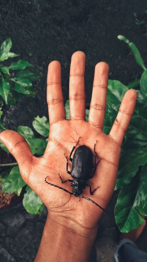 Cropped hand holding beetle over plants