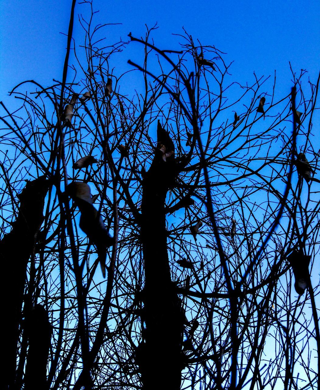 silhouette, bare tree, tree, low angle view, branch, sky, clear sky, outdoors, blue, day, statue, standing, real people, sculpture, one person, nature, architecture, beauty in nature, people