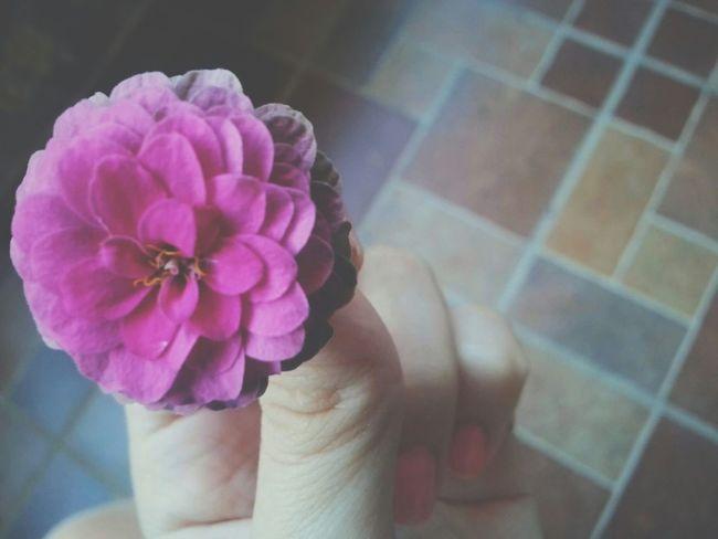 Flowers Pink Flower Pink Hand Gift Souvenirs ✨... Tlemcen In My Garden Flowerporn Flower Photography Flower Collection EyeEm Best Shots - Flowers Showcase: November