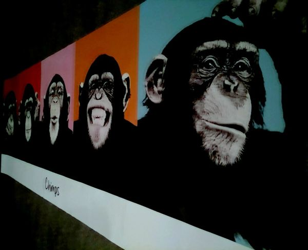 Poster Thinking Art And Craft Chimps Creativity Mammal Portrait Smile Tobeornottobe