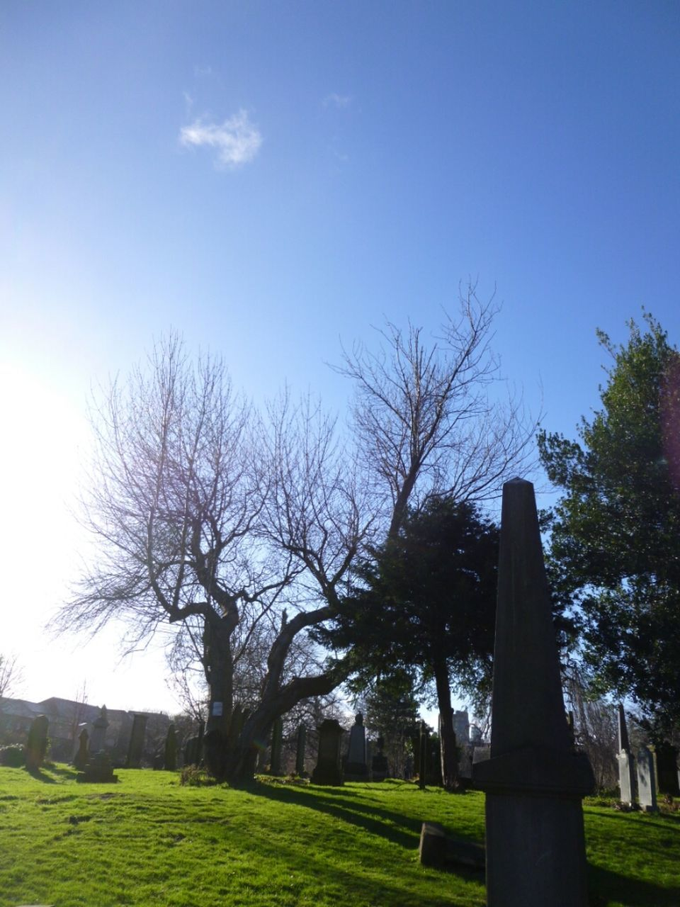 tree, cemetery, tombstone, memorial, grass, tranquility, tranquil scene, day, nature, no people, gravestone, sky, graveyard, outdoors, landscape, growth, beauty in nature, scenics, bare tree, clear sky