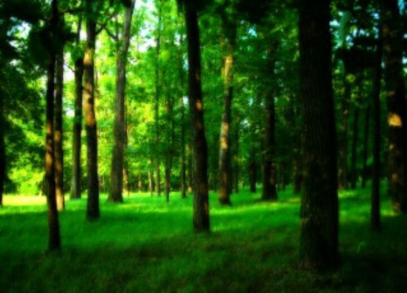 Trees Trees And Nature Green Green Green!  Nature_ Collection  Wonderful View Photography Time Beauty In Nature No People EyeEm Gallery Landscape Love Nature Photography Wonderful Feelingood Relaxtime Varazdin 😍😍😍😍😍.