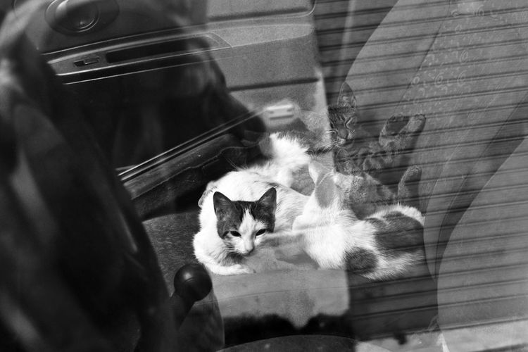 Animal Themes Black And White Black And White Photography Car Cat Cats City Life Close-up Day Domestic Animals Domestic Cat Feline Indoors  Looking At Camera Mammal No People One Animal Palermo Pets Portrait