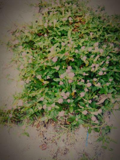 Praça🌱🌱 Plants 🌱 First Eyeem Photo