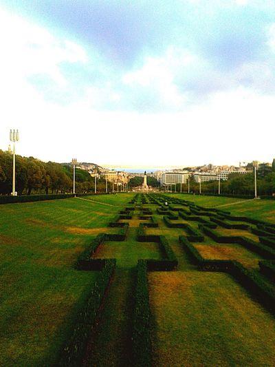Sky Grass Green