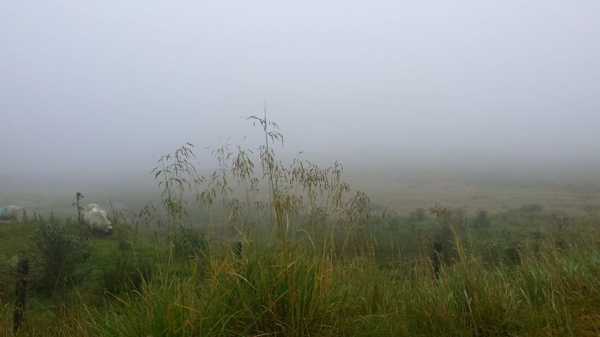 Fog Nature Grass Outdoors No People Animals In The Wild Social Issues Landscape Animal Wildlife Dawn Day Rural Scene Beauty In Nature Tree Bird Water Sky Mammal Sheep Meadow