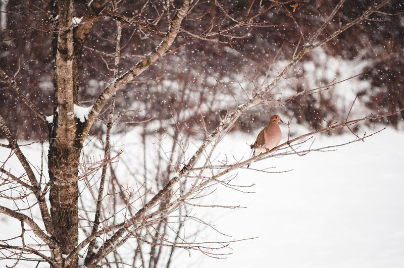 Tree Snow Winter Cold Temperature Branch Plant Nature Vertebrate Land Day Bare Tree Beauty In Nature Animals In The Wild Animal Wildlife Bird One Animal Animal Themes Animal No People Snowing Outdoors Extreme Weather Blizzard