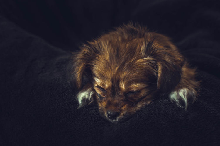 Close-up of puppy lying down on bed